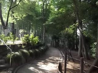 シイ・ケヤキの大木