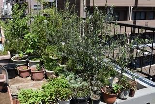 屋上ガーデン2