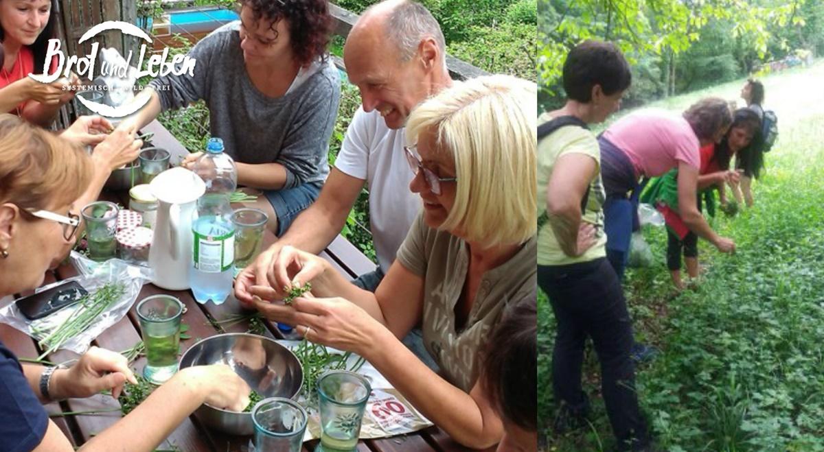 Kräuterwanderung und Workshop