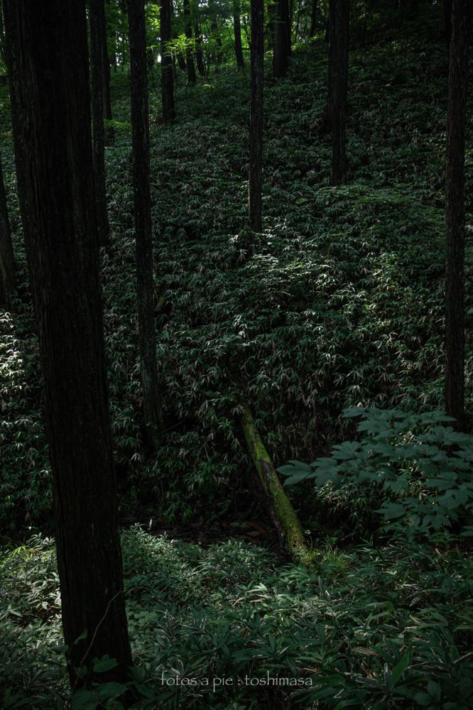 CanonEOS5Dmk2  CanonEF24-70mmF4L  iso200 29mm f4 1/125 M  photo : toshimasa