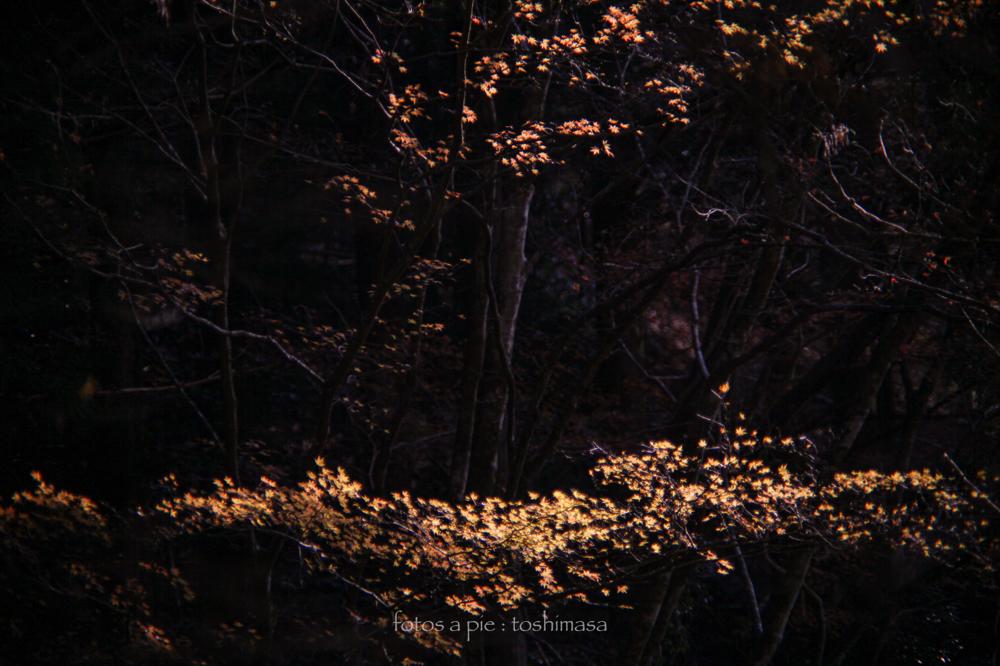 CanonEOS5Dmk2  CanonFD135mmF2.5sc  iso100 f2.5 135mm 1/1000 M