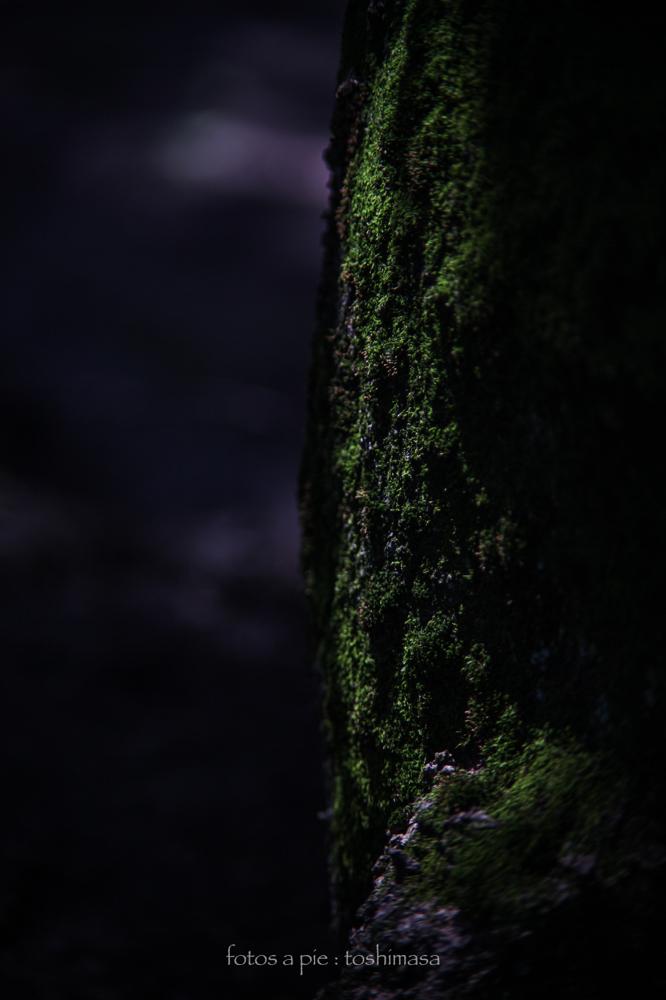 CanonEOS5Dmk2  CanonFD135mmF2.5sc  iso100 135mm f4 1/500 M  photo : toshimasa