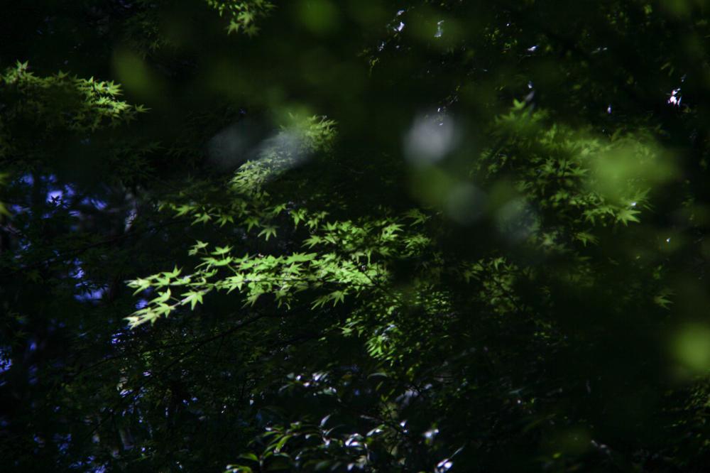 CanonEOS5Dmk2  Sigma-Z pantel 135mmF2.8  iso100 135mm f4 1/1250 M  photo : toshimasa