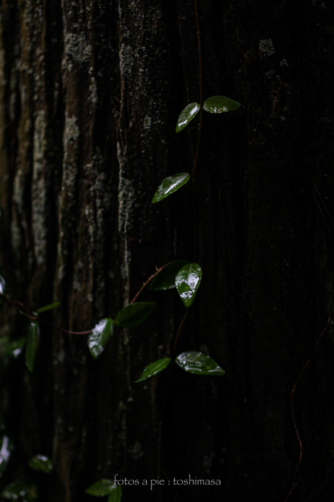 CanonEOS5Dmk2  SIGMA50mmF2.8macro iso500 50mm f2.8 1/80 M  photo : toshimasa