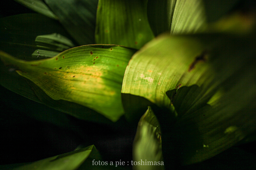 CanonEOS5Dmk2  SIGMA50mmF2.8macroEX-DG  iso200 50mm f2.8 1/8000 M  photo : toshimasa