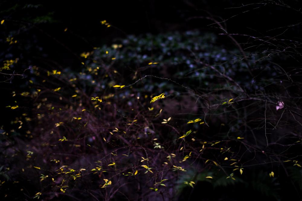CanonEOS 5Dmk2  Sigma50mmF1.4EX DG  ios100 50mm f1.4 1/500 Tv  photo: toshimasa