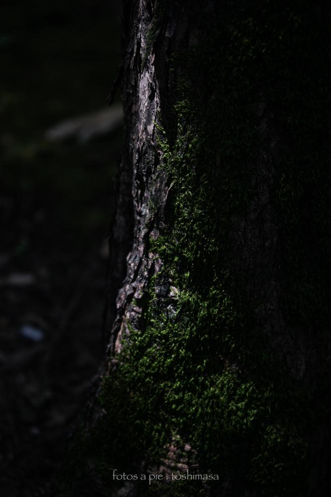 CanonEOS5Dmk2  CanonEF70-300mmF4-5.6L  iso100 135mm f4.5 1/400 M  photo : toshimasa