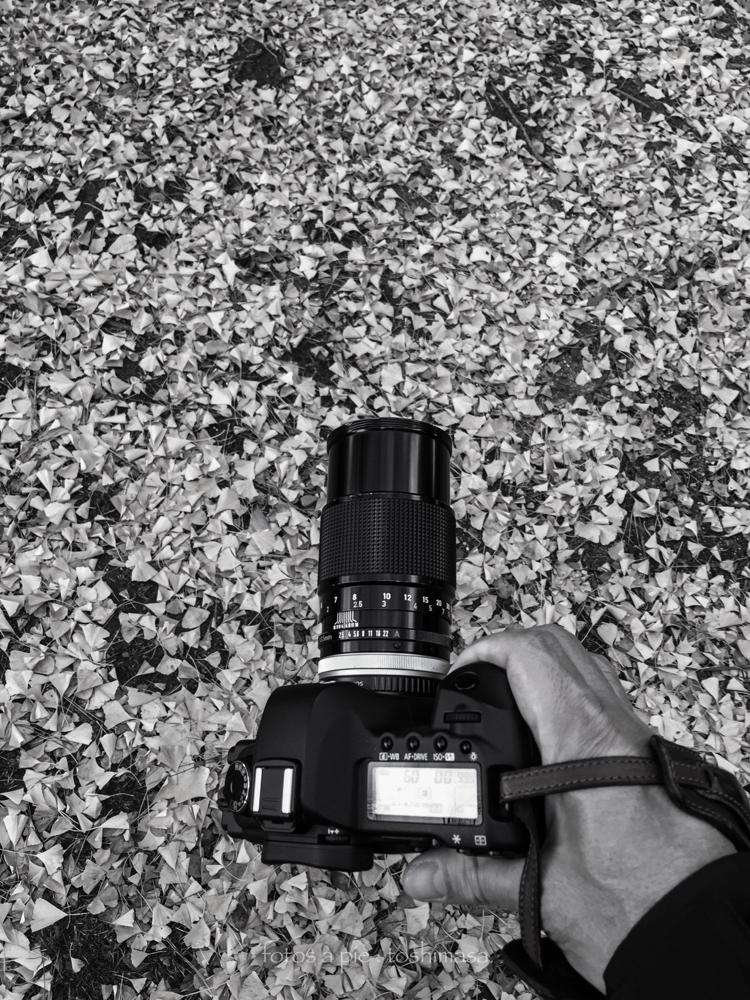 1973 CanonFD135mmF2.5s.c. &  CanonEOS5Dmk2