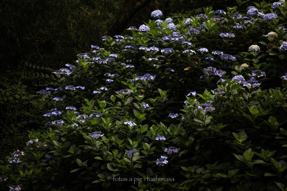 CanonEOS5Dmk2  CanonEF24-70mmF4L  iso200 53mm f4 1/250 M  photo : toshimasa