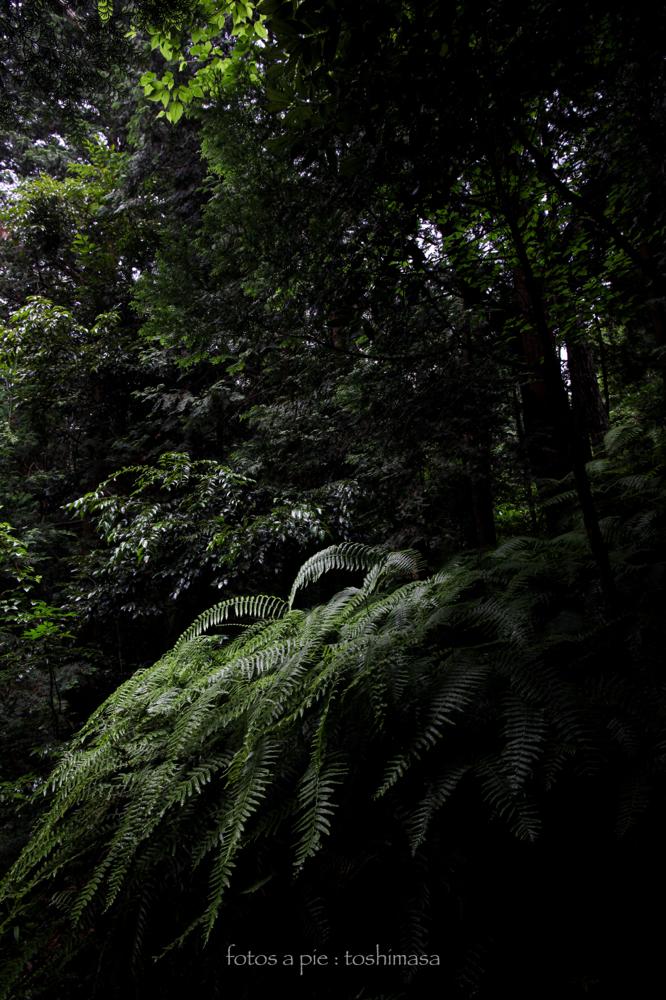 CanonEOS5Dmk2  CanonEF24-70mmF4L  iso200 24mm f8 1/30 M  photo : toshimasa