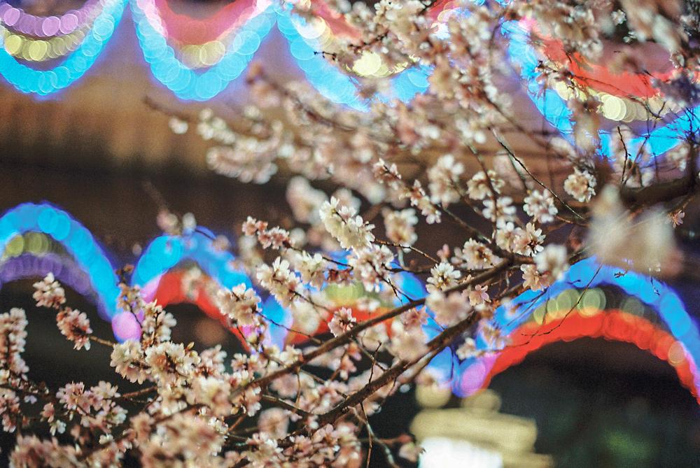 名古屋  CanonF-1n  CanonFD50mmF1.4  Lomography-400  photo : toshimasa