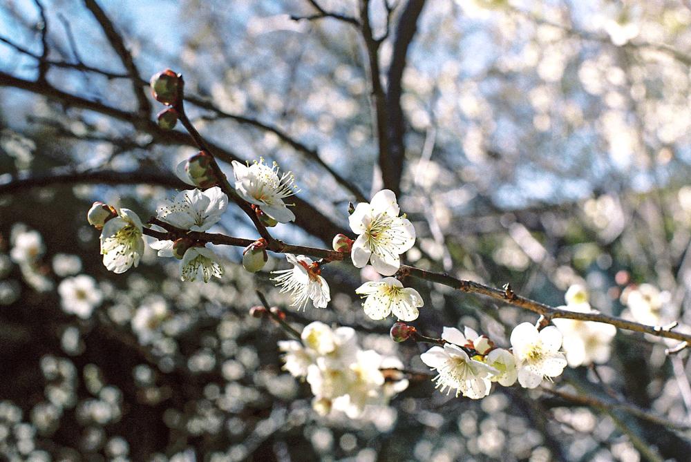 丈山苑  CanonF-1n  CanonFD50mmF1.4  Lomography-400  photo : toshimasa