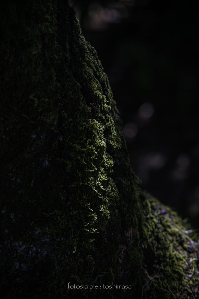 CanonEOS5Dmk2  CanonFD135mmF2.5sc  iso100 135mm f4 1/320 M  photo : toshimasa