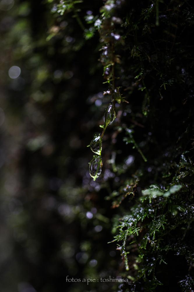 CanonEOS5Dmk2  Sigma50mmF2.8EXmacro  iso500 50mm f2.8 1/200 M  photo : toshimasa