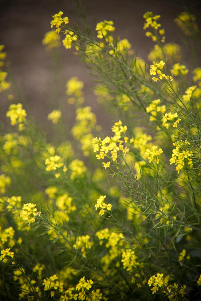 CanonEOS5Dmk2  CanonFD135mmF2.5sc  iso100 135mm f2.5 1/650 M  photo : toshimasa