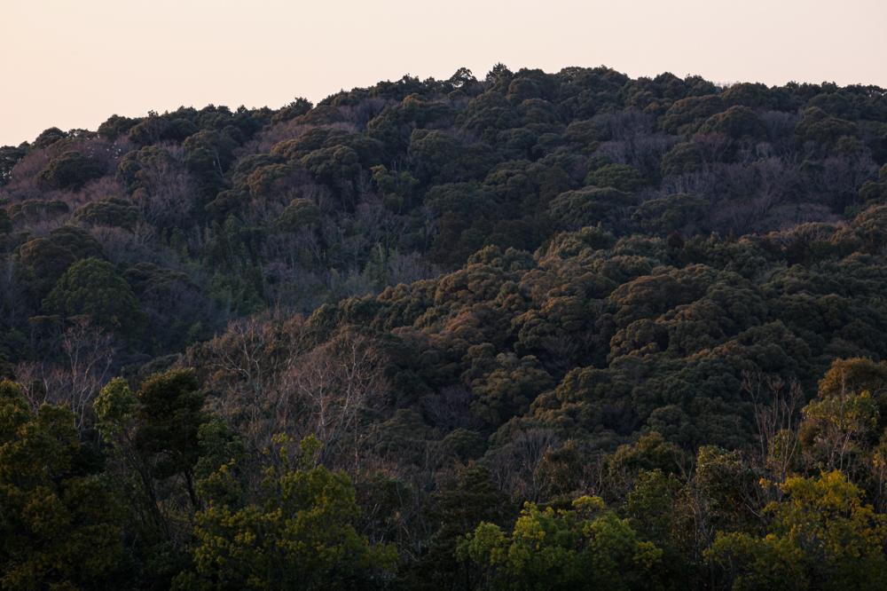 CanonEOS 5Dmk2  CanonEF70-300L  iso100 170mm f10 1/20 M  photo : toshimasa