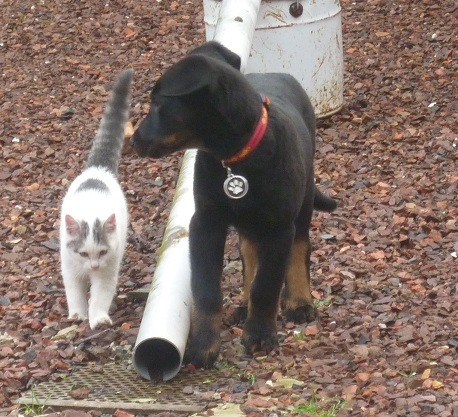Griff et Figaro