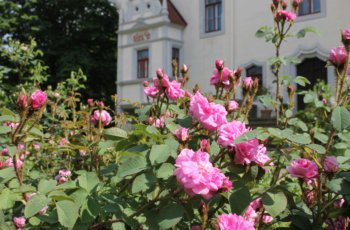 Tag des offenen Gartens im Heynitzer Schlosshof