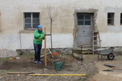 Apfelbauschnitt, Gutshof Heynitz 2019, Foto: Eike von Watzdorf