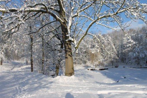 Heynitzer Schlosspark, Winter 2019, Foto: Eike von Watzdorf