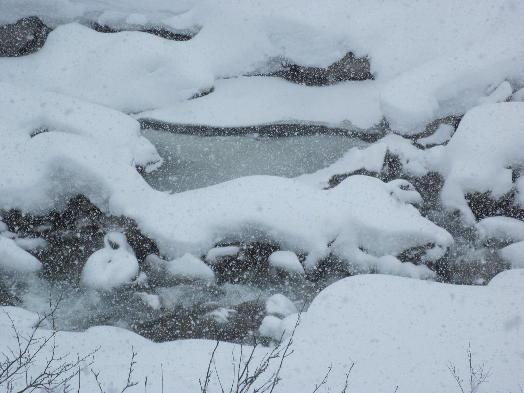 Schnee-Eidechse...