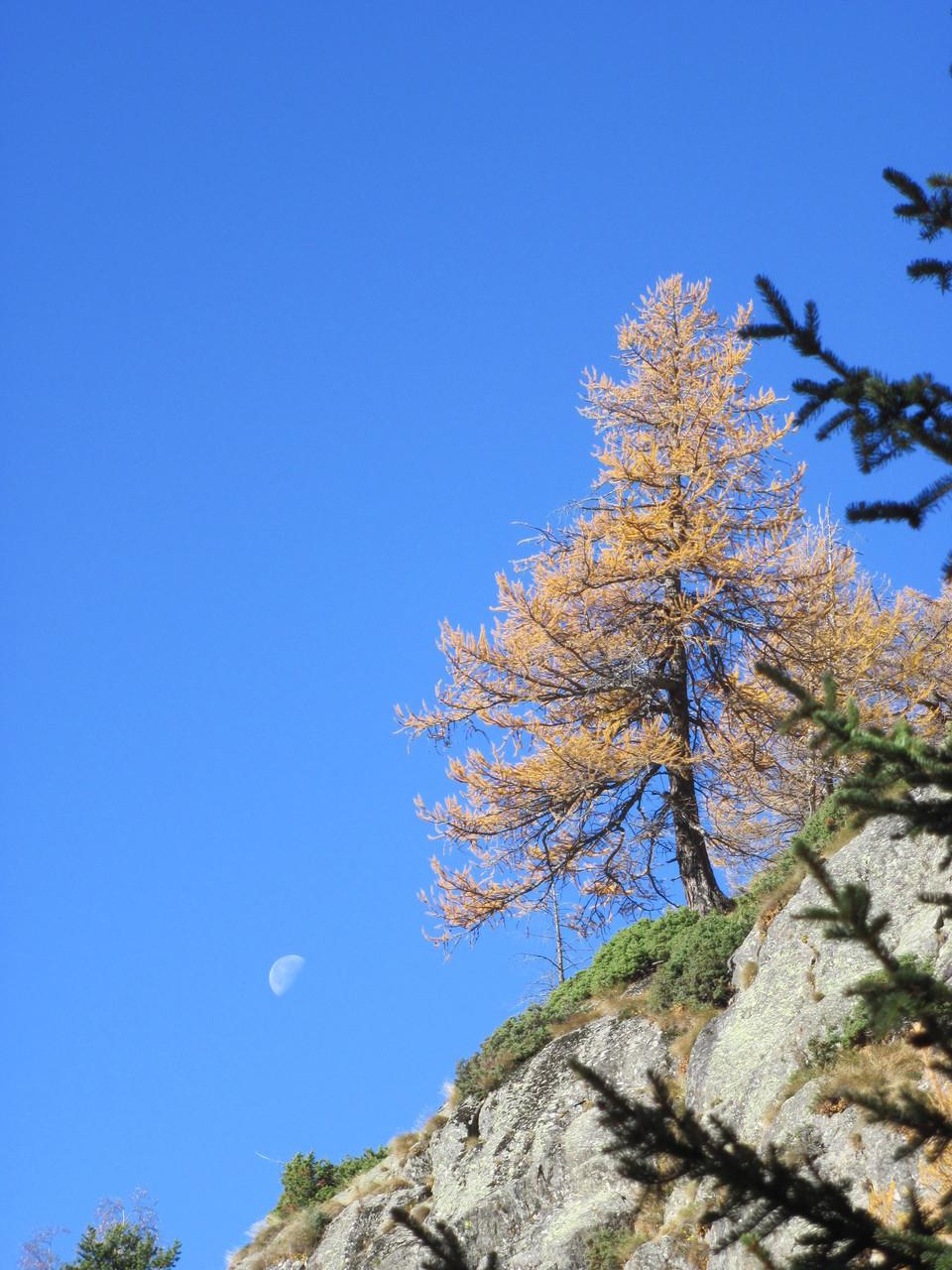 Mond und Herbst