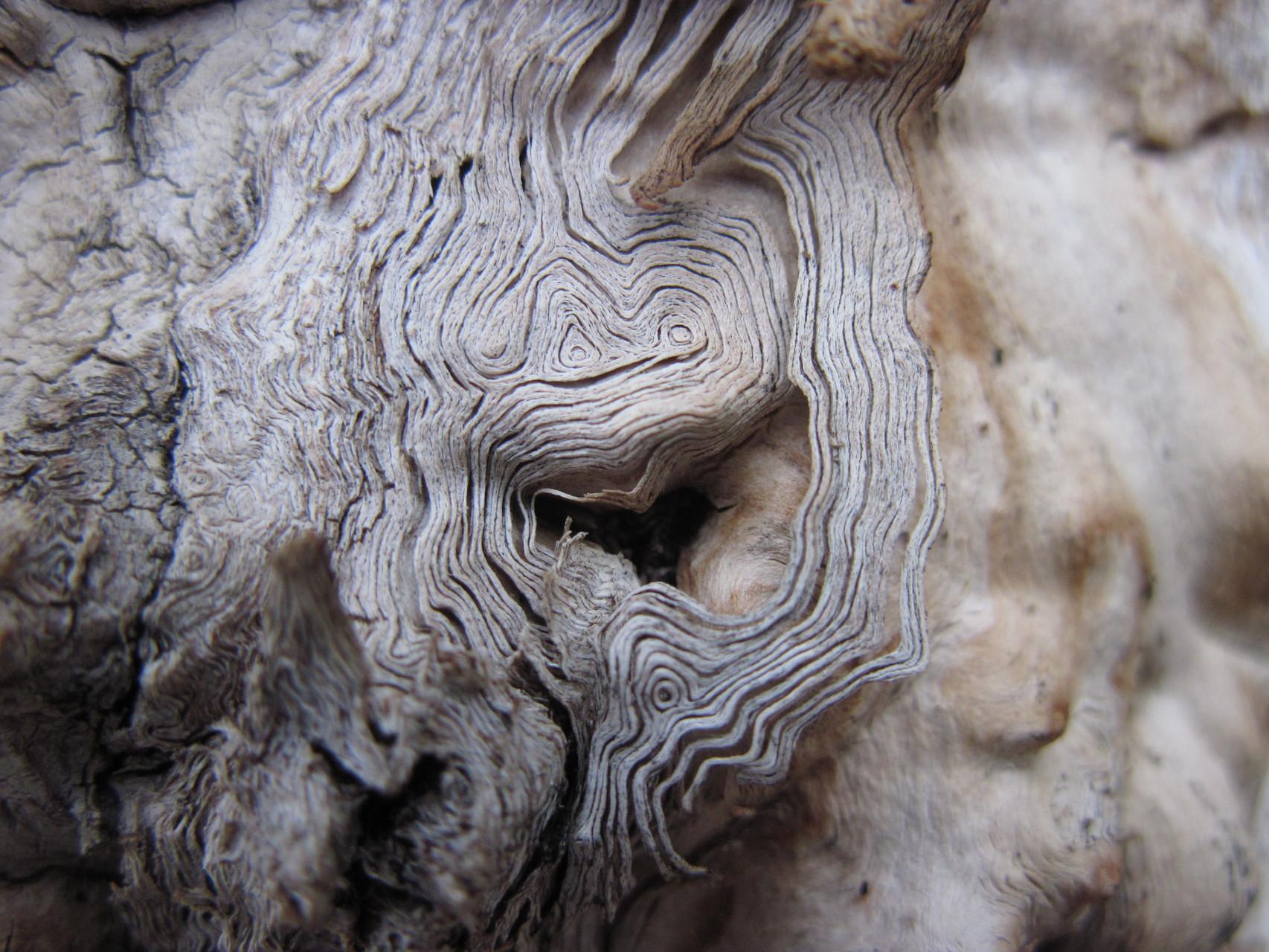 Filigrane Kunst der Natur