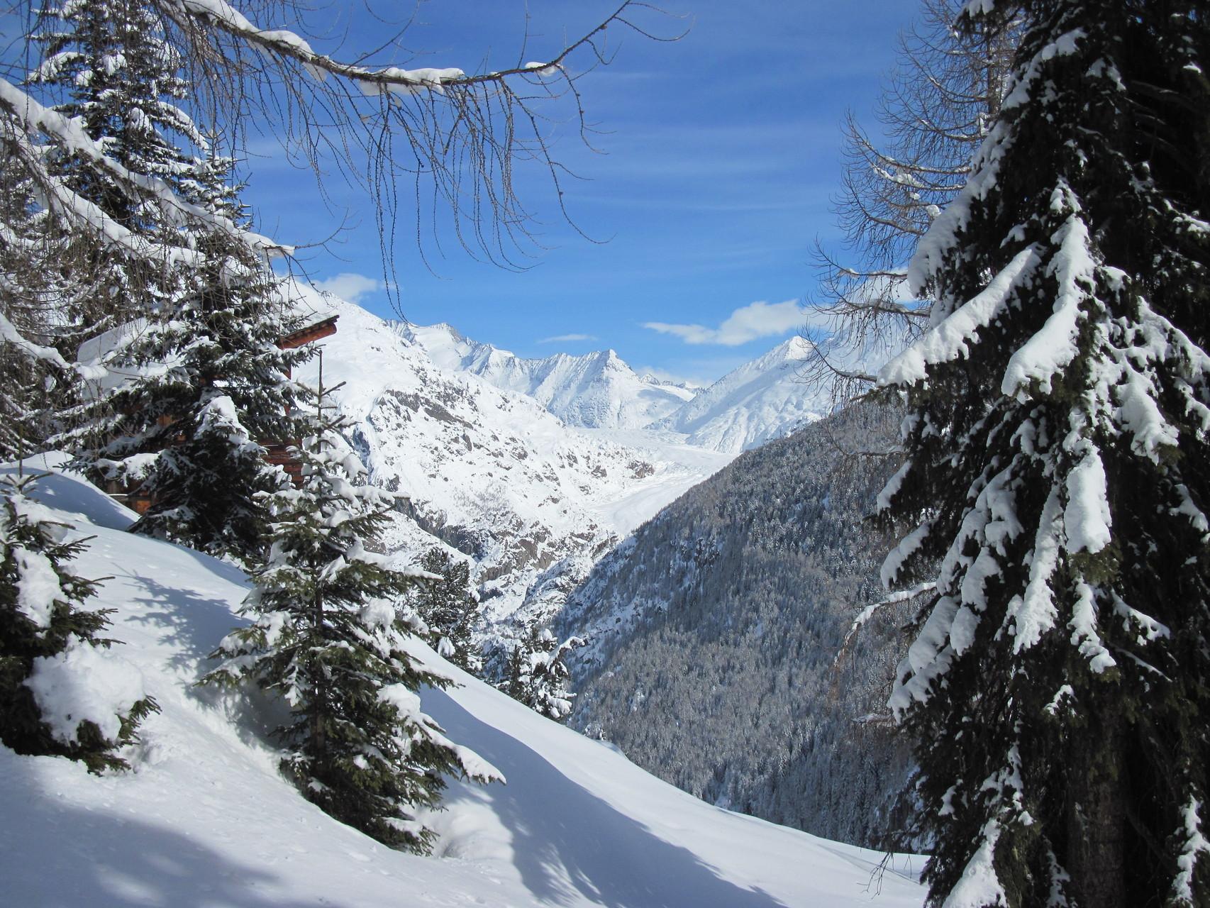 Ausblick auf den Grossen Aletschgletscher