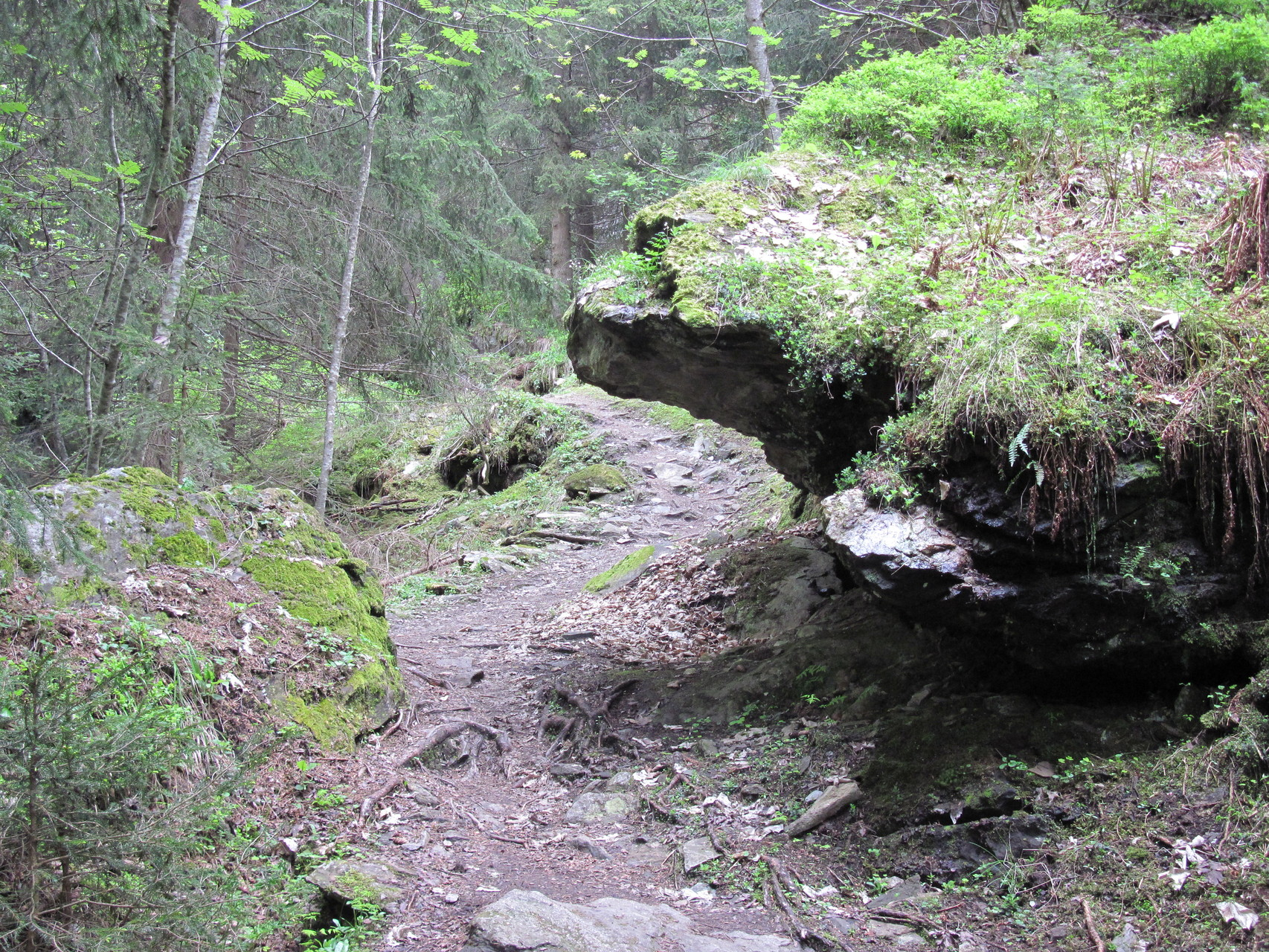 Im Wald Richtung Massaweg - Suonenwanderung zwischen Blatten und Oberried