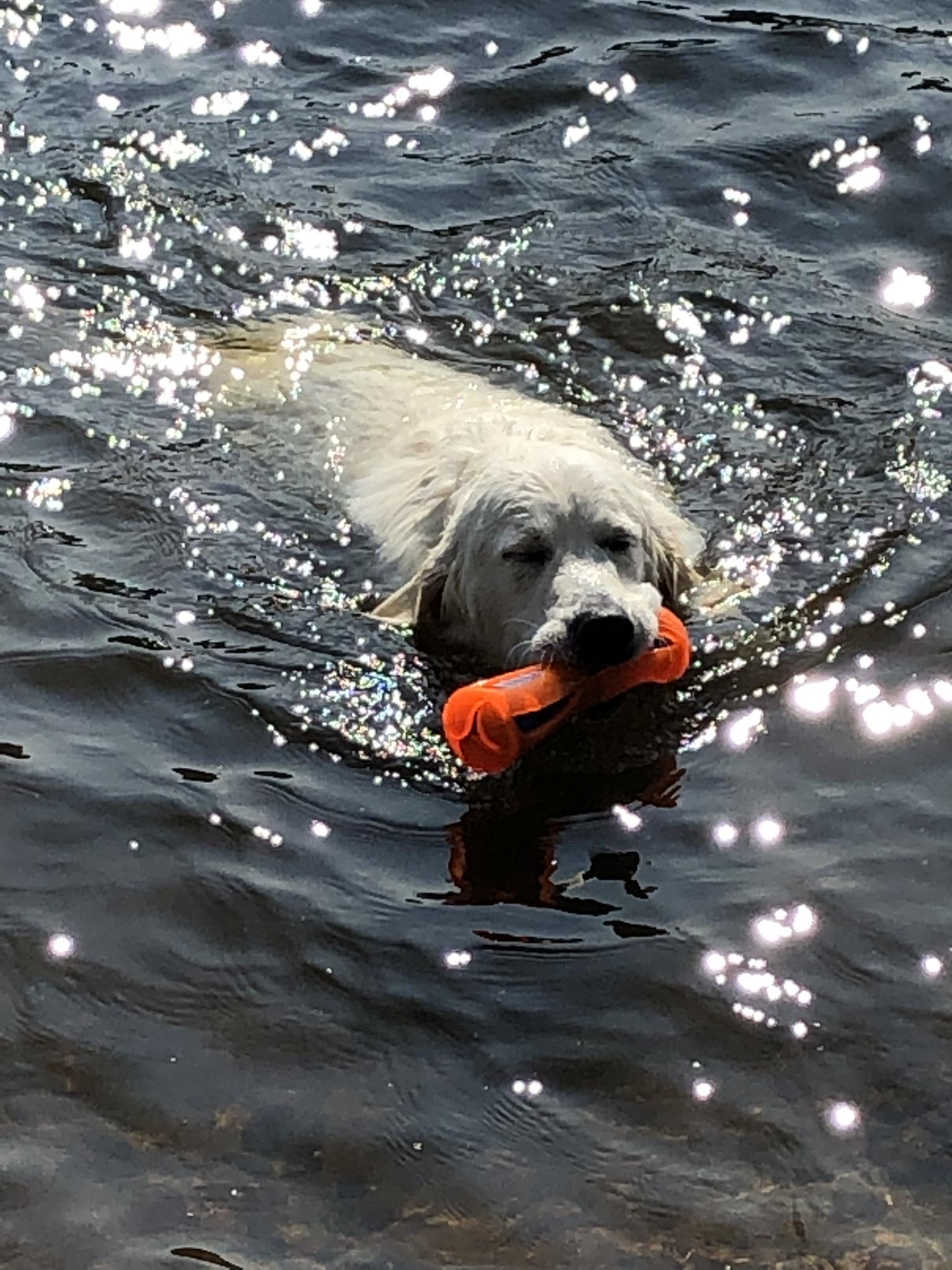 Schaut, wie gut ich schwimmen kann!!