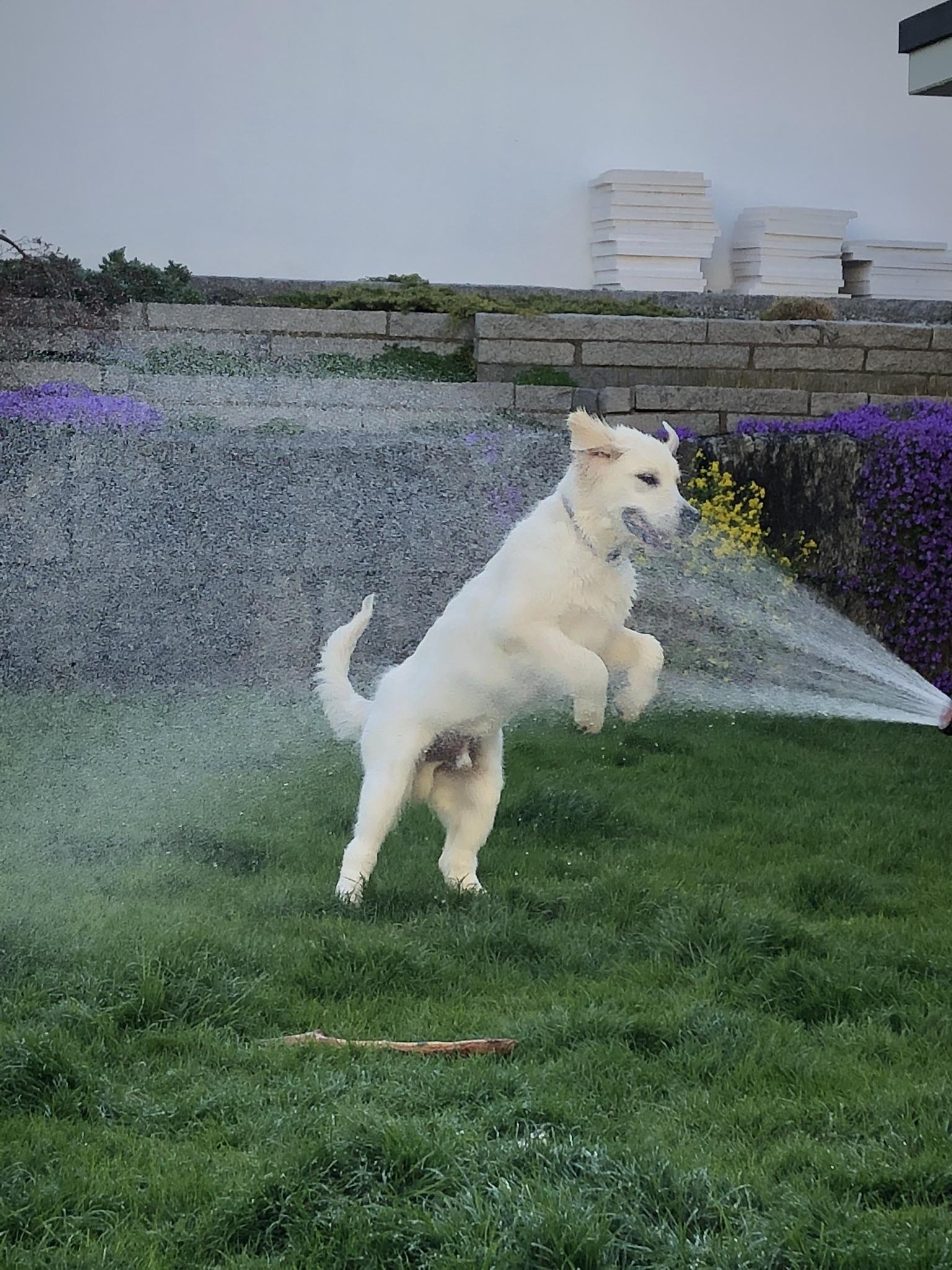 Wasserparty im Garten... darüber freue ich mich immer wieder!!