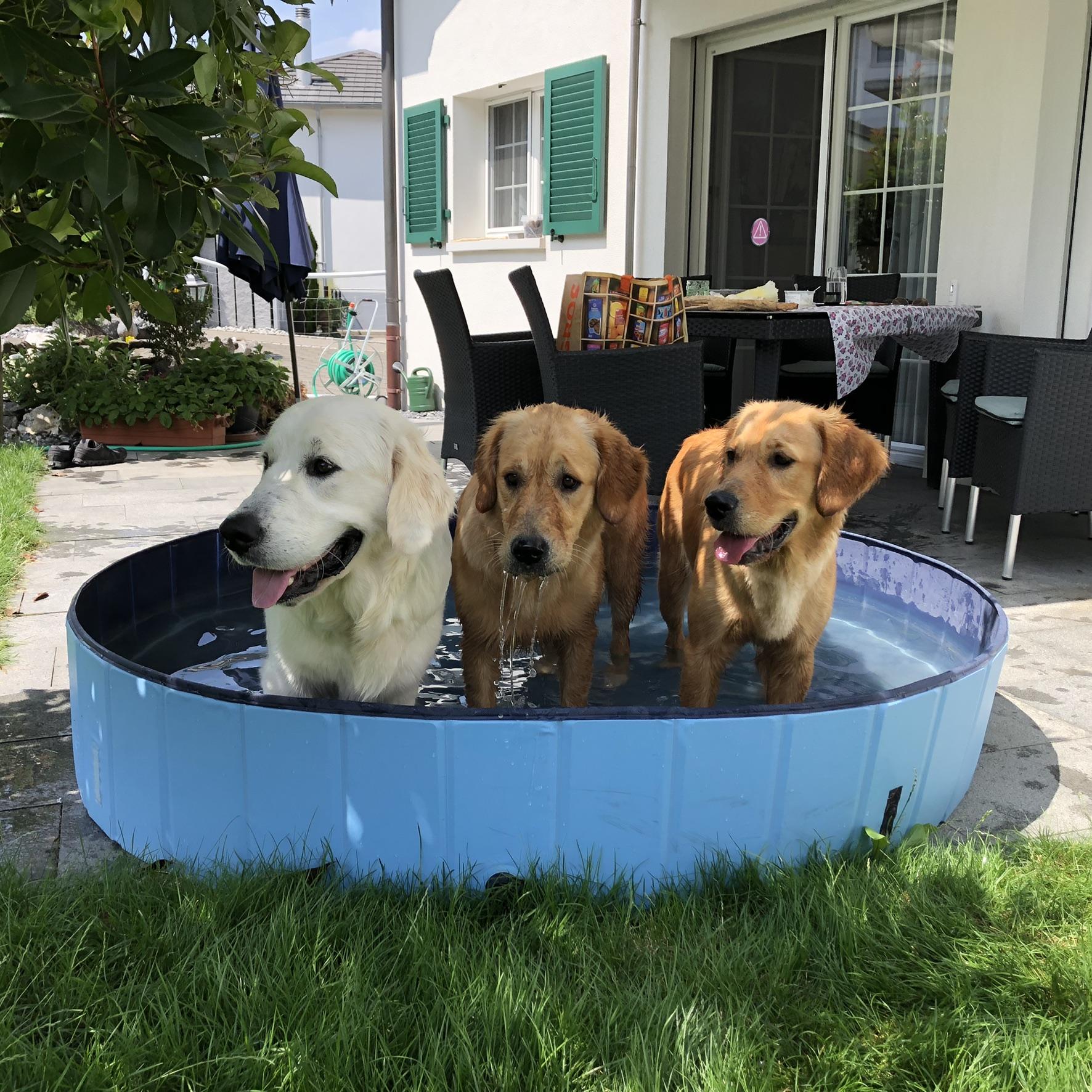 Zusammen mit Fly und Eira in meinem Pool