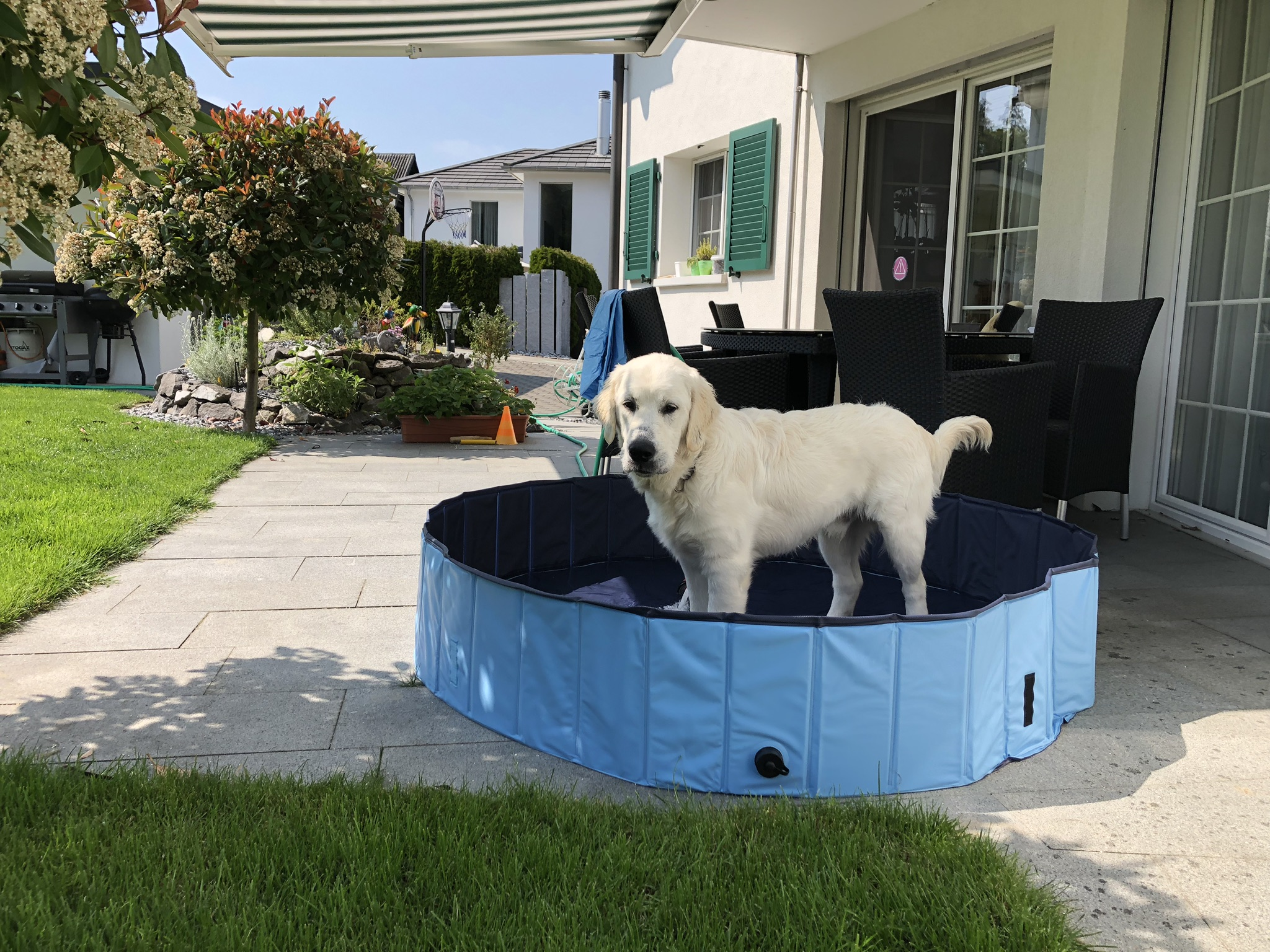 Mein neuer Swimmingpool im Garten