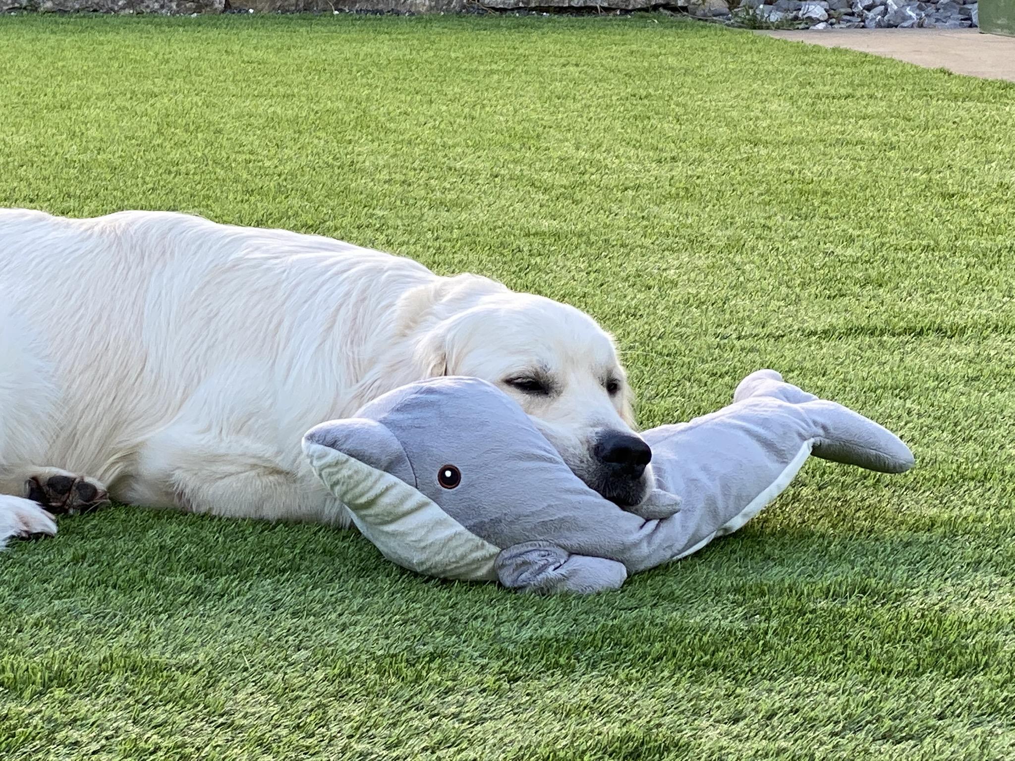 Mein Delphin-Freund