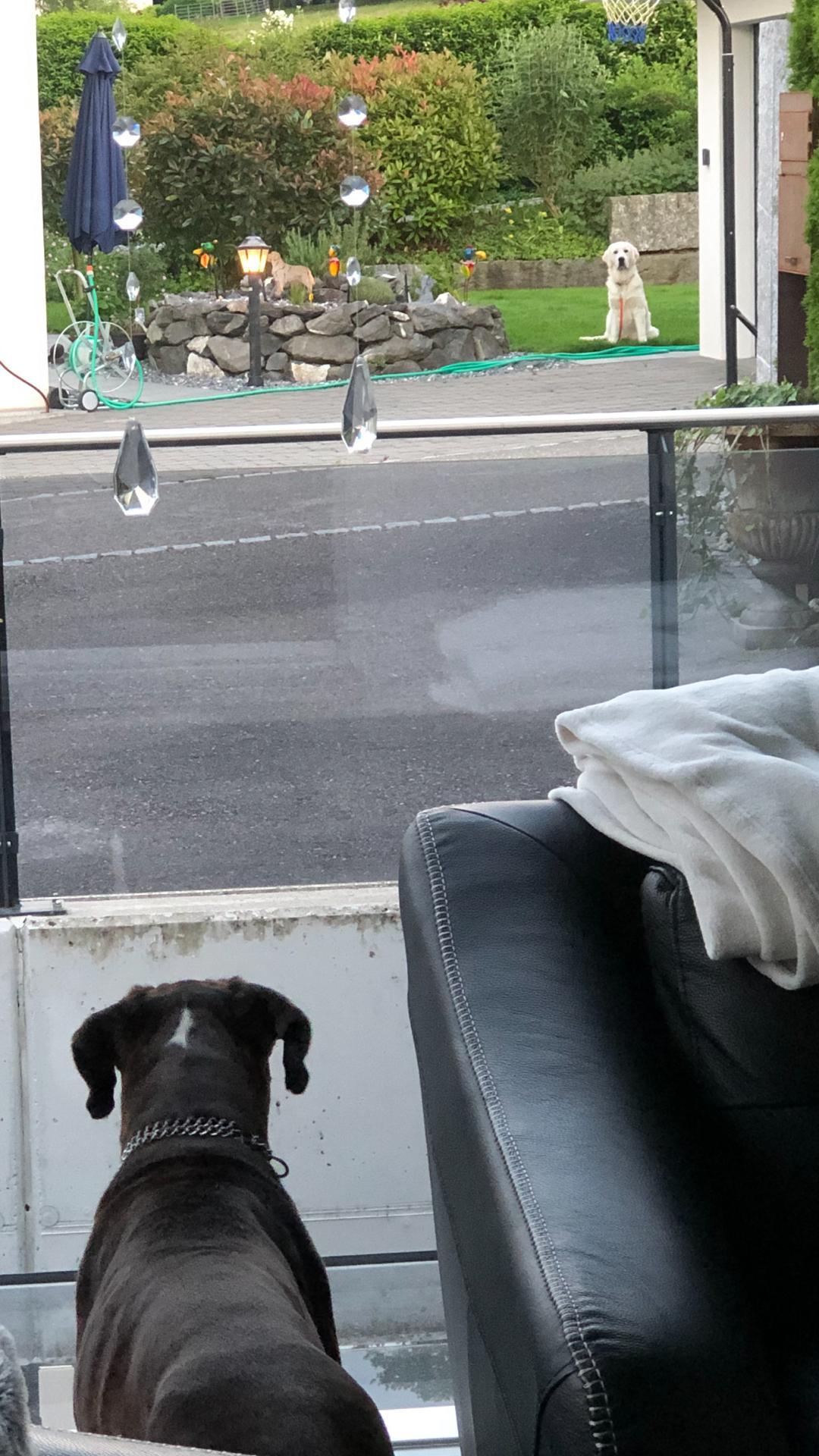 Genau schauen: Amy kann mir durch ihr Stubenfenster zu meinem Garten rüber winken... :-)