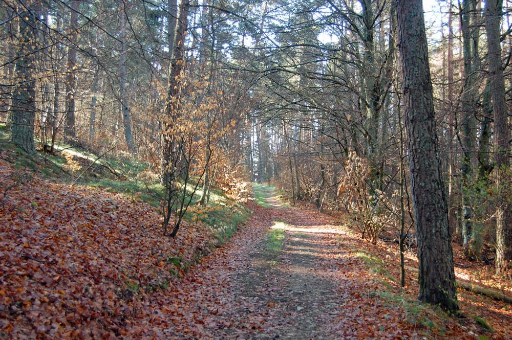 randonnée en automne