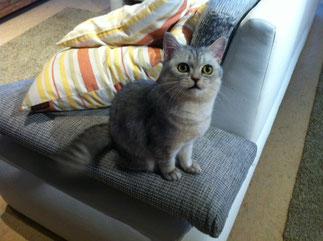 Kayla vom Wolfswald im Alter von 13 Monaten