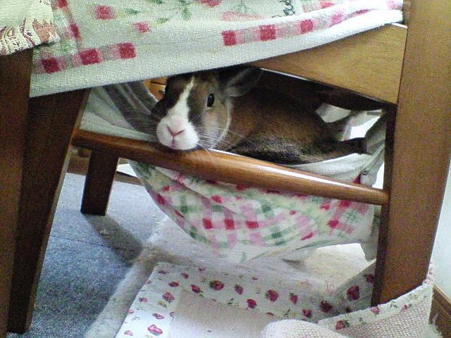 椅子カバーのハンモック