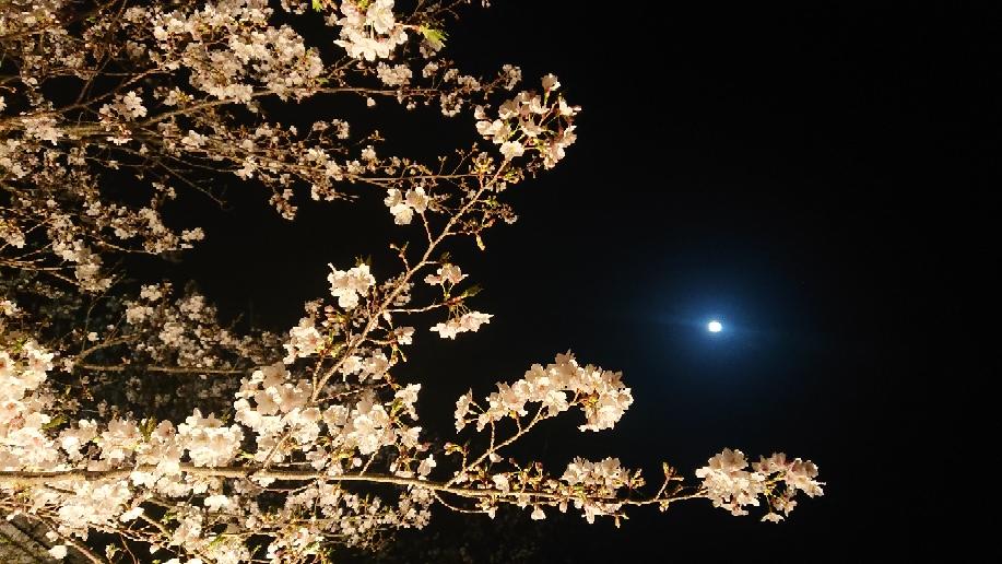 夜桜とお月様😃💕