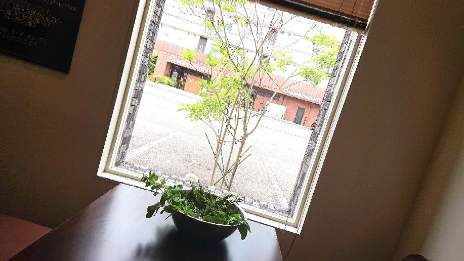 窓枠とハーブ、きれいな空間😌