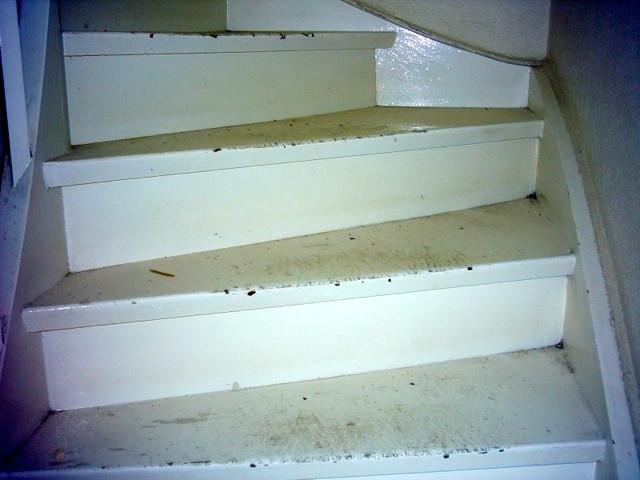 Treppen schleifen in Potsdam