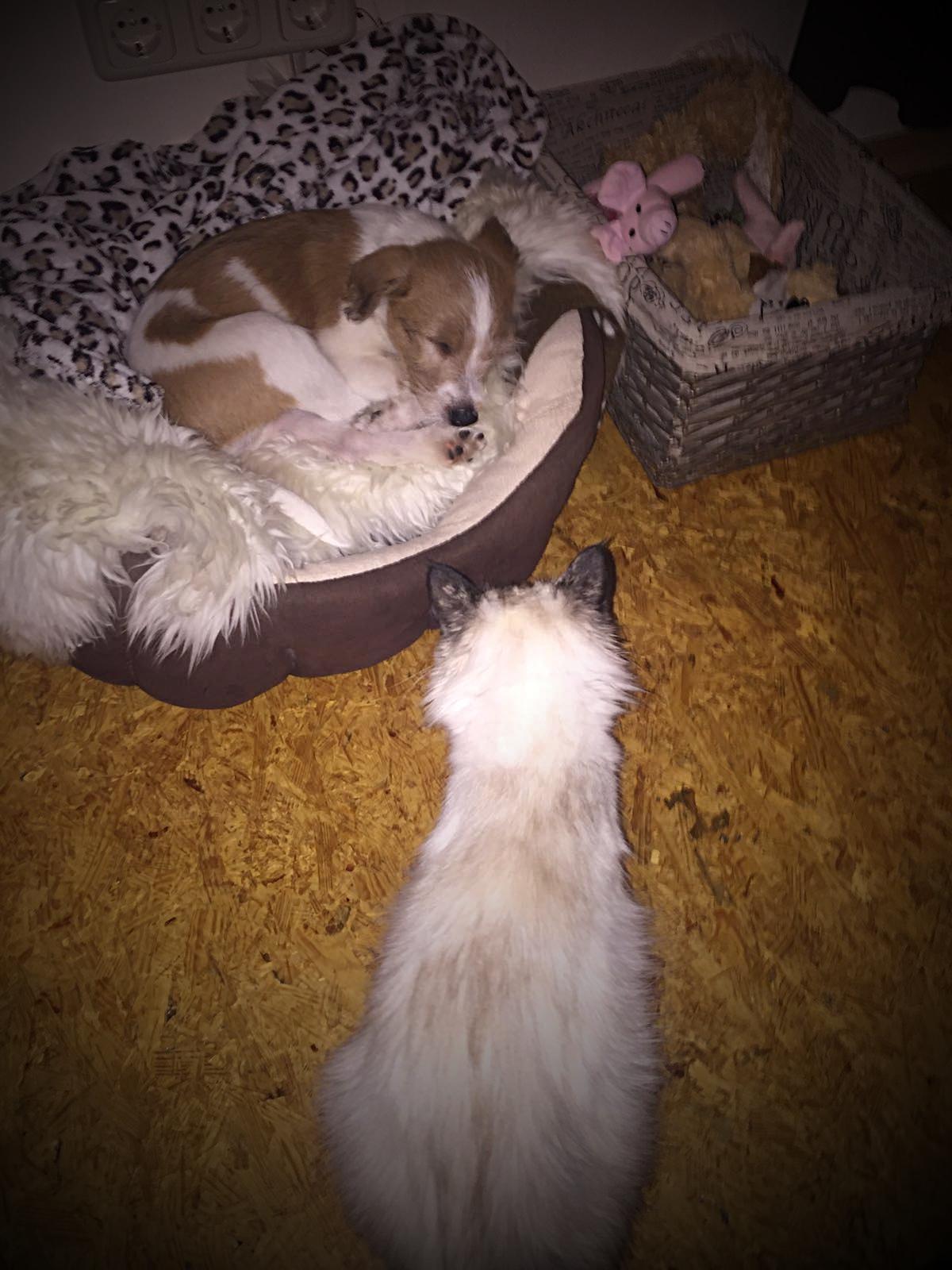..die Hauskatze bewacht seinen Schlaf..