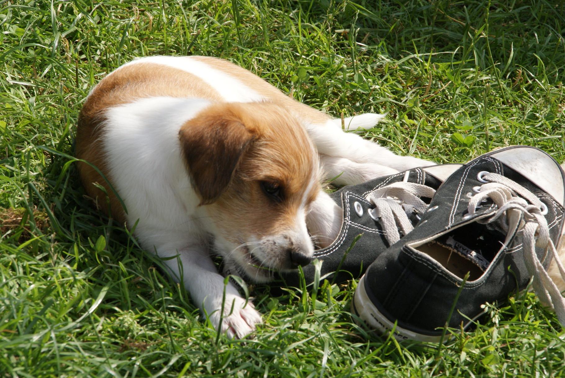 Schuhe & Schnürsenkel