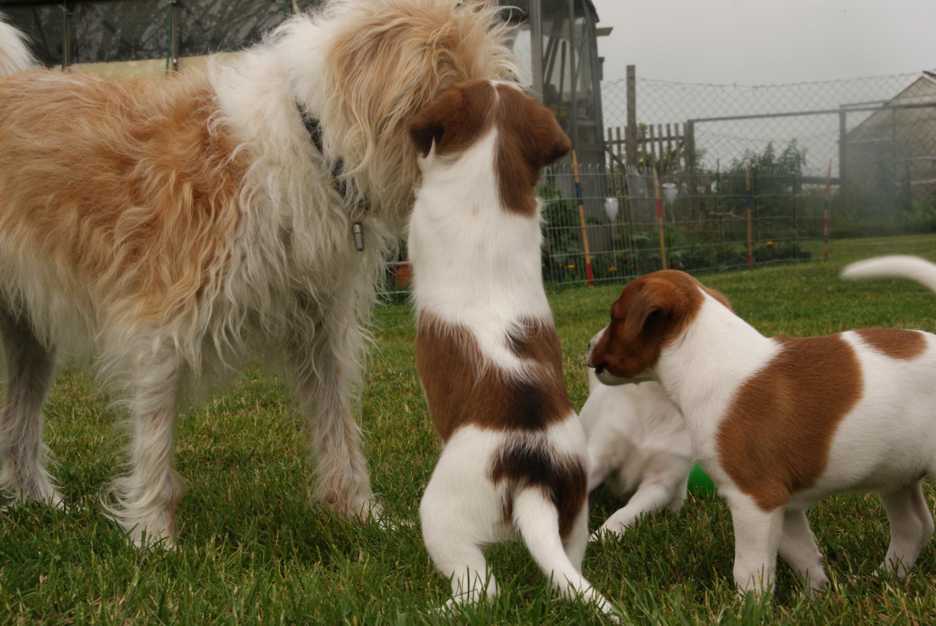 Sally mit Leana & Lira-Lou