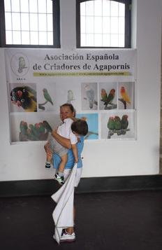 Concurso Anual de Agapornis AECA 2013