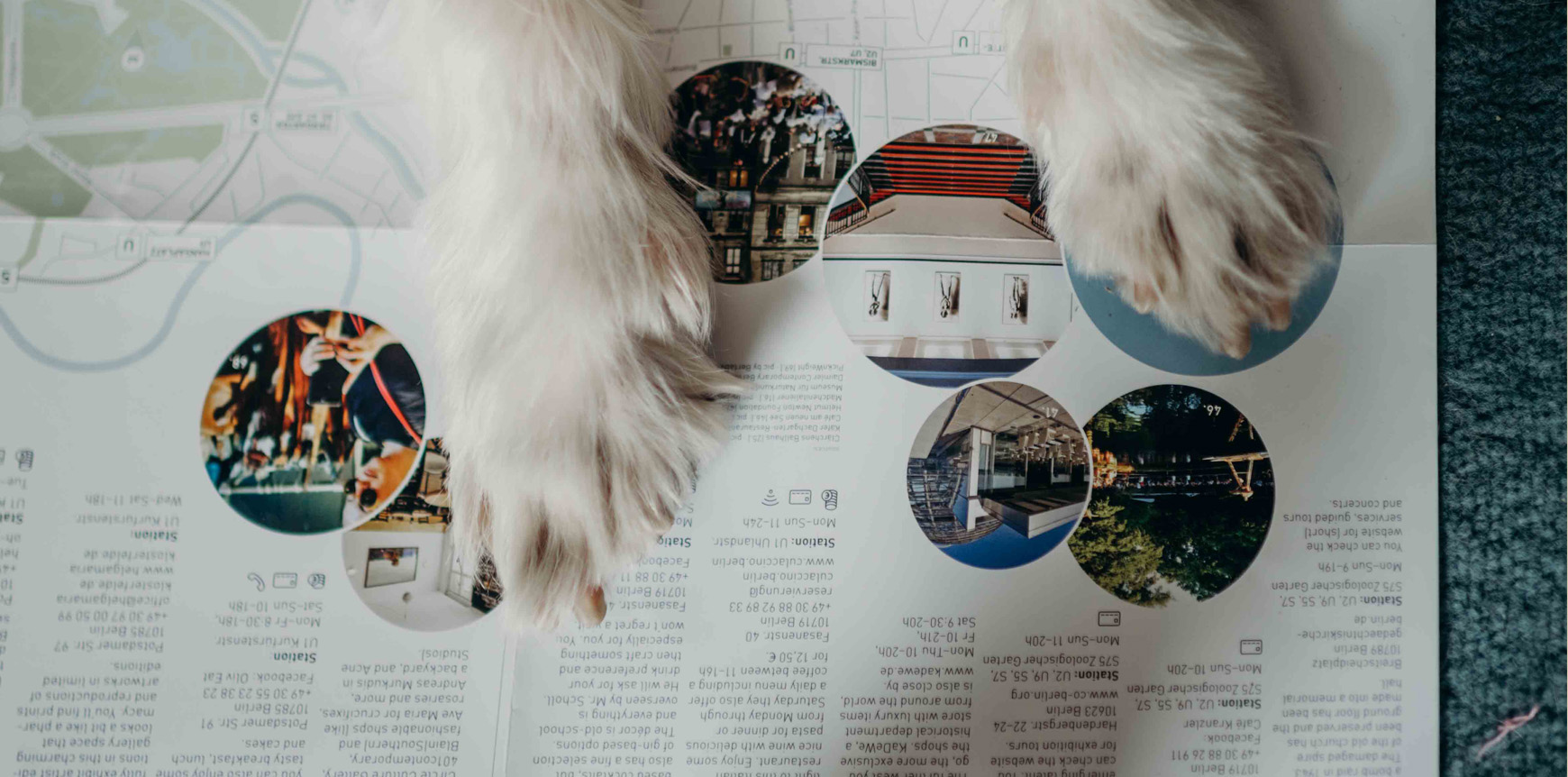 Dog-friendly Berlin map by walk this way  - pic by Briana Moore