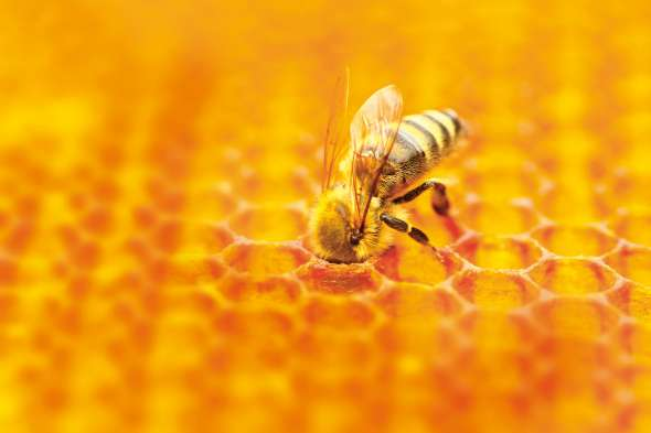 Apithérapie : les abeilles nous soignent 🐝