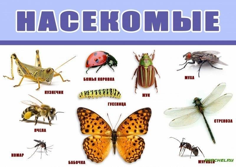 пользе насекомые список с картинками дизайн туалета так