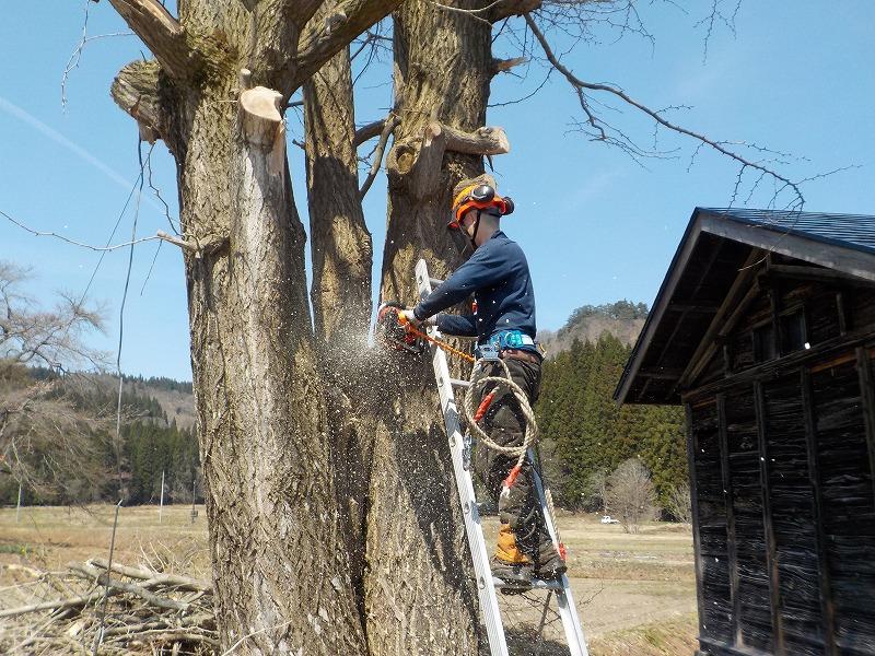 伐採と丸太造材作業ー森林事業部ー