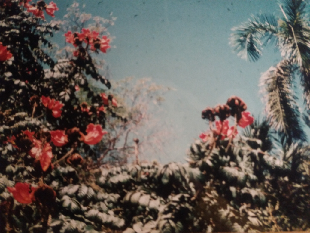 Assuan Kitchener Insel
